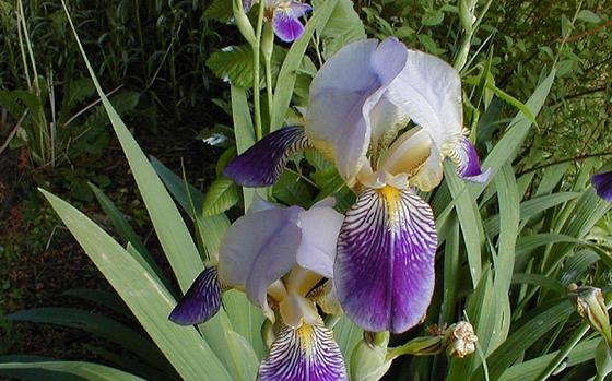 uitheemskerk_0023_Iris bleeker