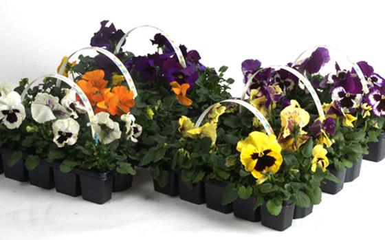 uitheemskerk_0043_Bedding plants